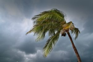 Wind and rain insurance claim adjusting assistance in FL